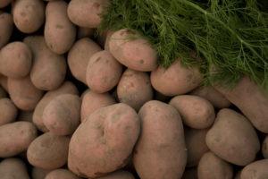 Mealy vs waxy potatoes